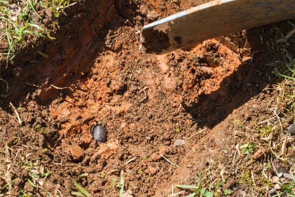 Something was exposed in the bottom of the hole I was digging