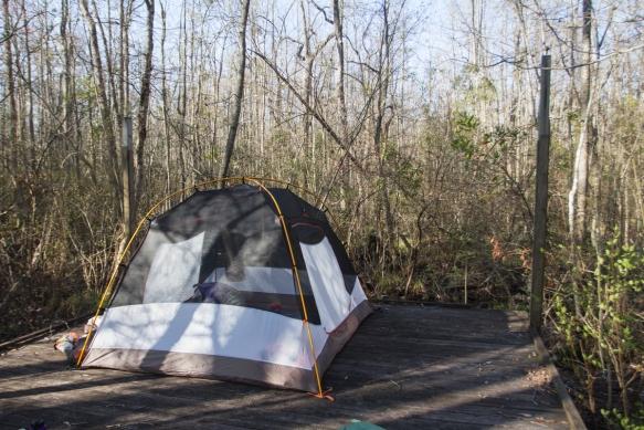 Royal Fern camping platform
