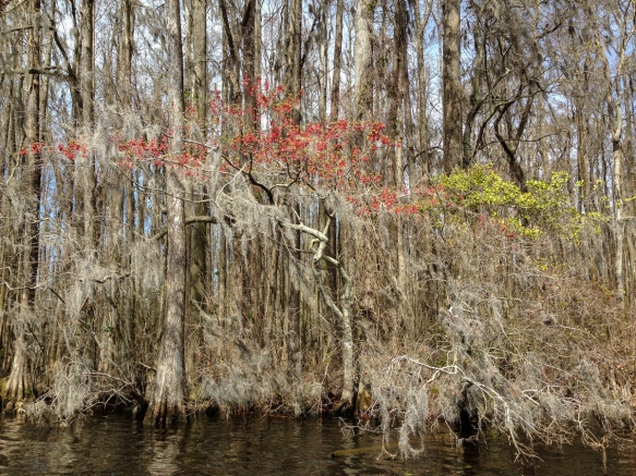 Spring colors in the swamp
