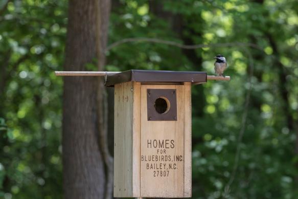 Chickadee nest box set up