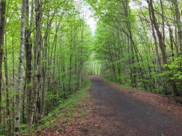 Creeper Trail