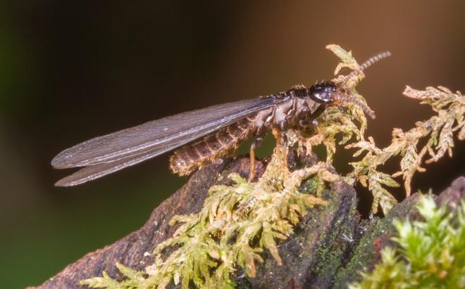 Termite close up 1