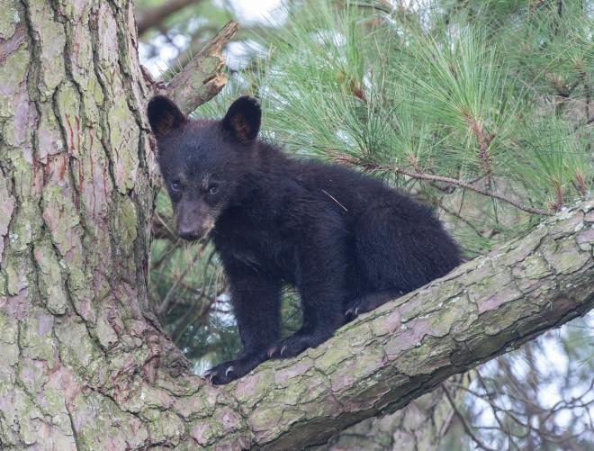 first cub looking shy