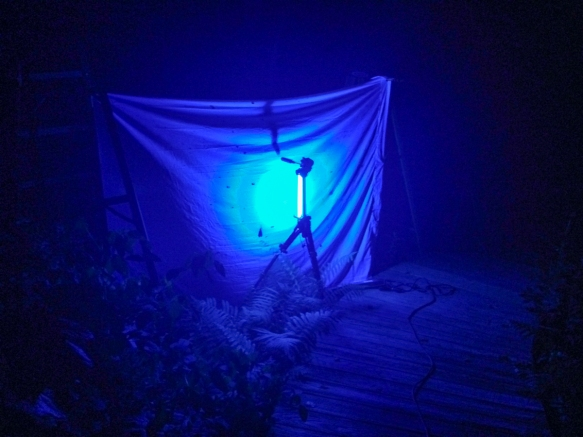 moth light set up
