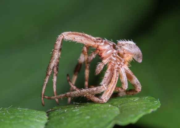 Spider shed 1