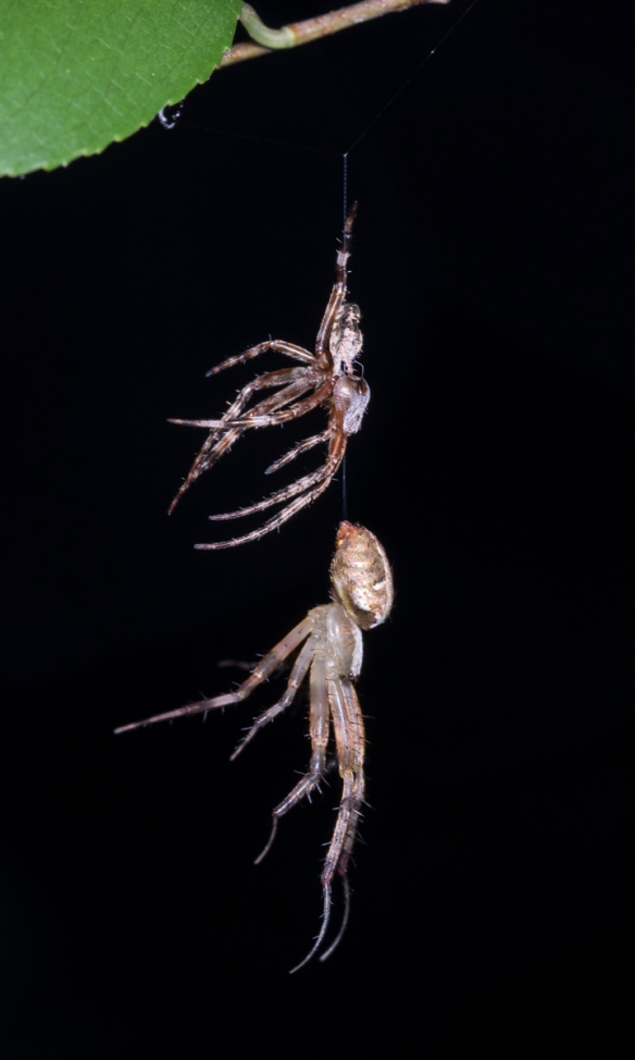 spider shedding skin 1