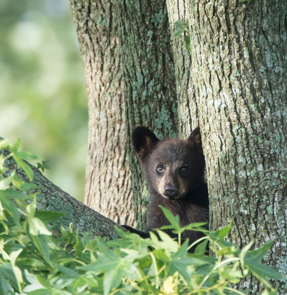 tiny cub in tree