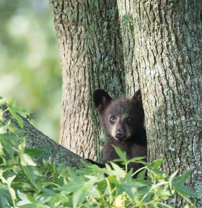 tiny cub in tree