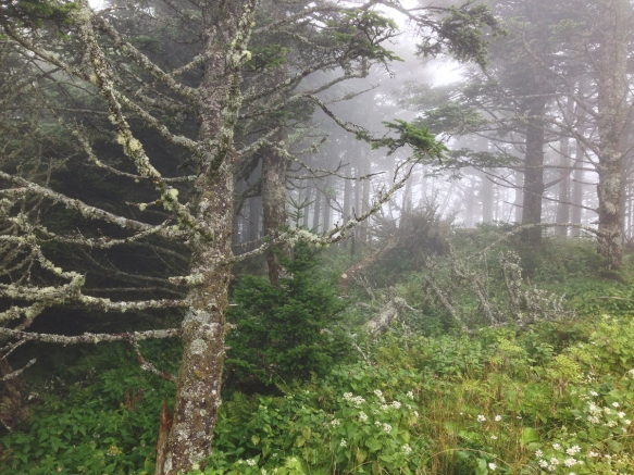 Forest near the summit in fog 1