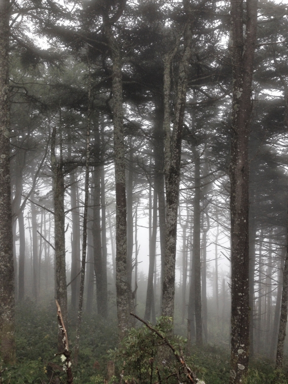 Forest near the summit in fog