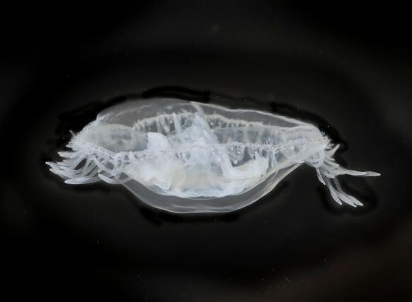 FW Jellyfish 2