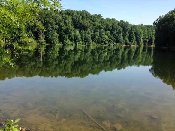 Redbud pond