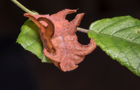 Monkey Slug orange color