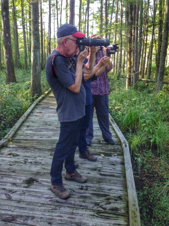 Photographing a spider in the swamp