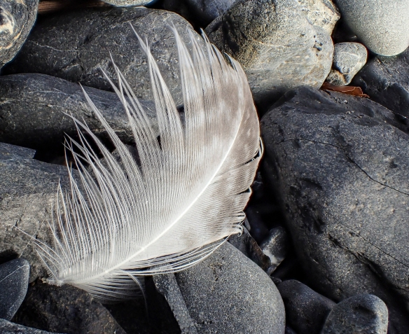 feather on beach