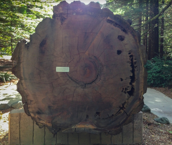 Redwood log