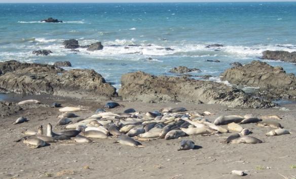 Sea Lions