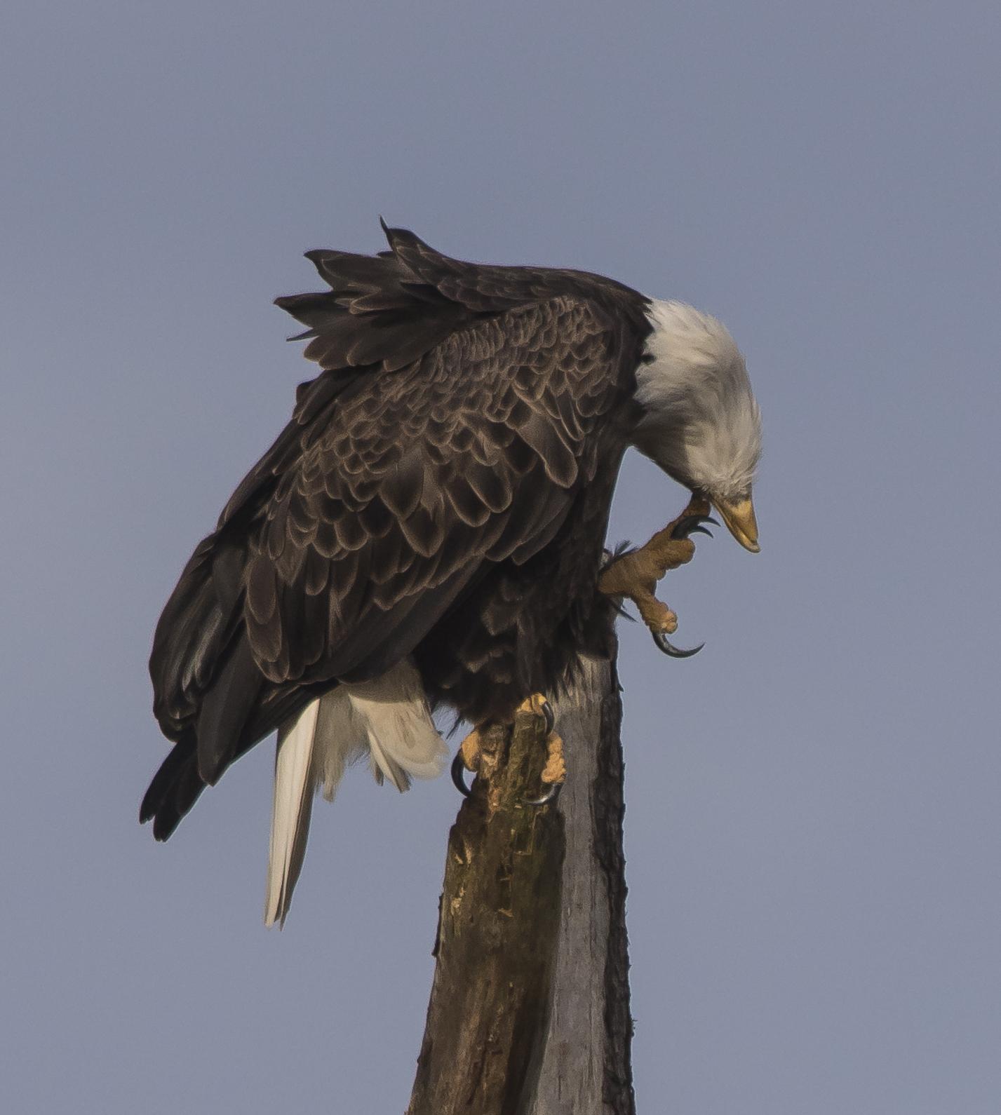 Chincoteague National Wildlife Refuge | Roads End Naturalist