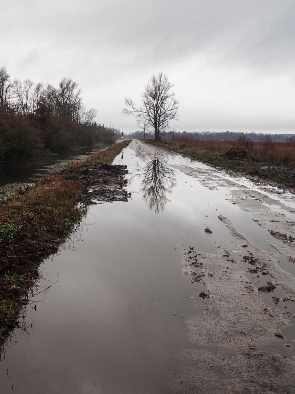 muddy pungo road