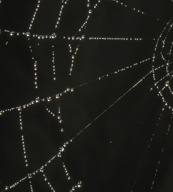 Orb web on foggy morning closeup