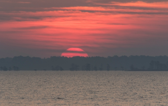 rising sun on lake mattamuskeet