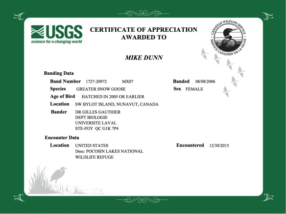 certificate for collar