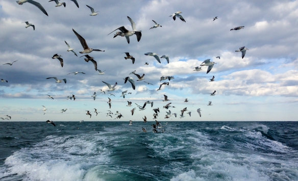 Birds following the boat