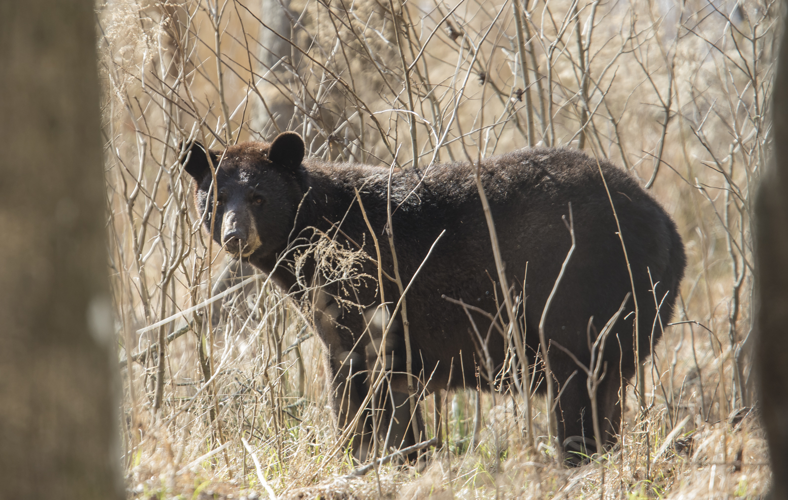 Black bear in woods pictures — img 9