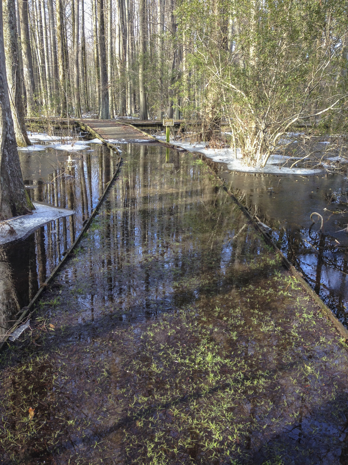 New Holland Trail under water