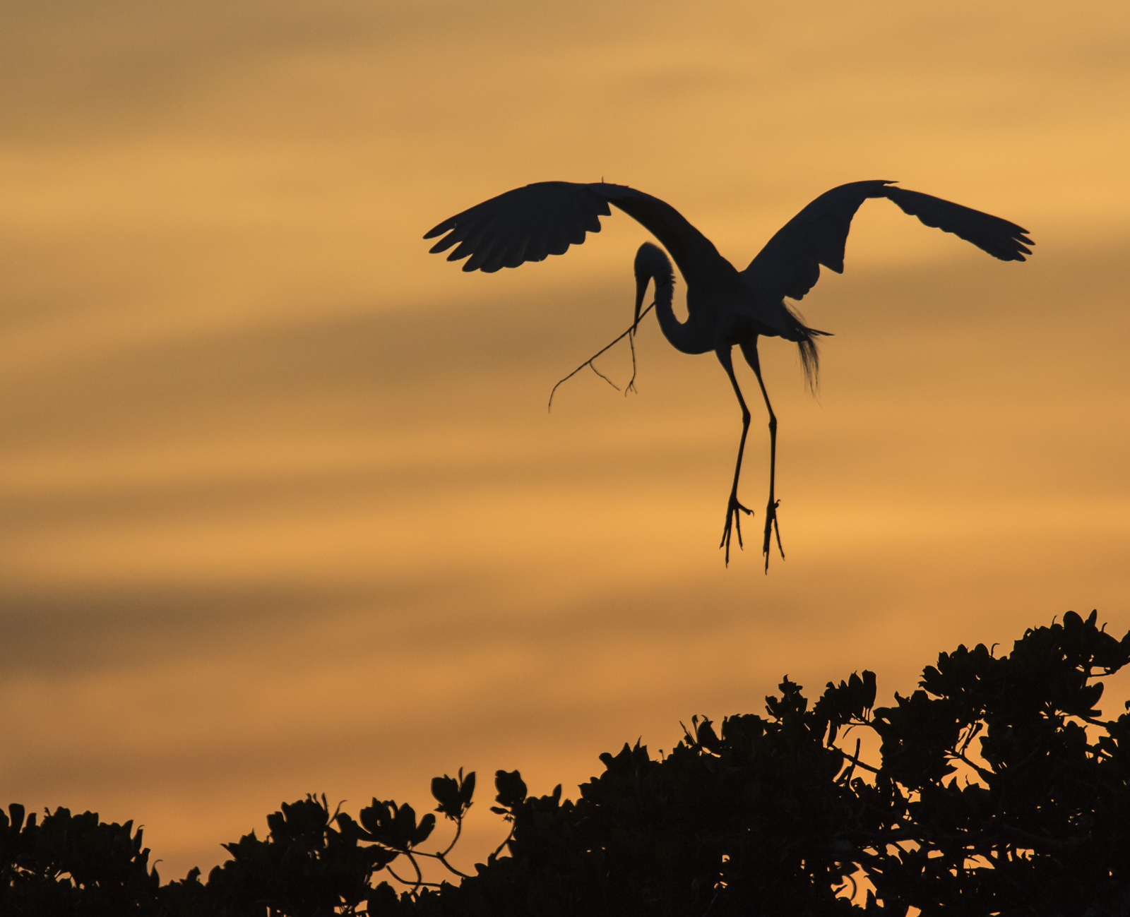 great egret carrying stick against orange sky 1