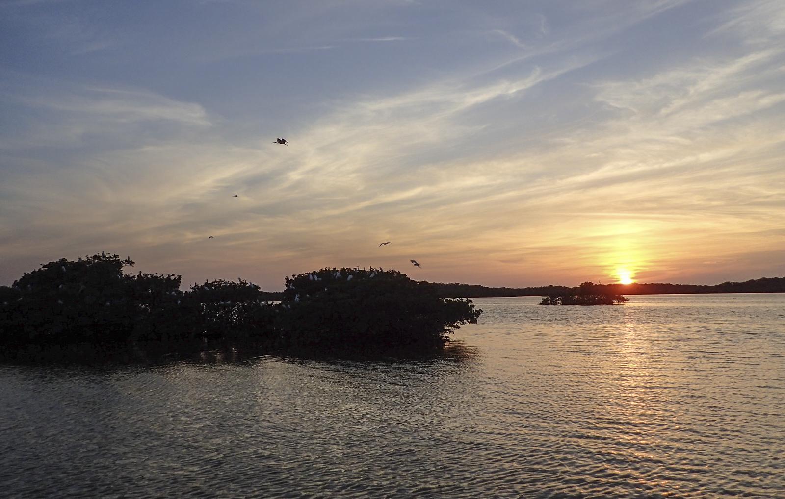magrove island sunset