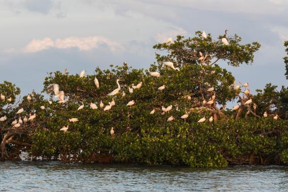 rooskery islands 1