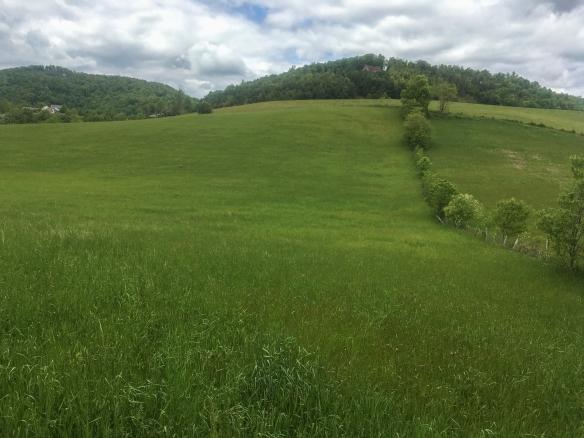 Bobolink pasture