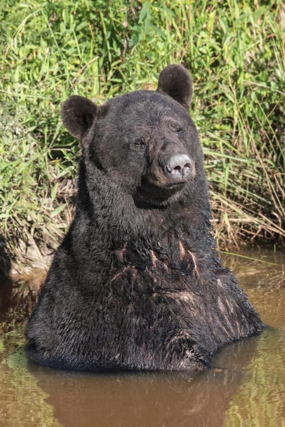 bear in canal