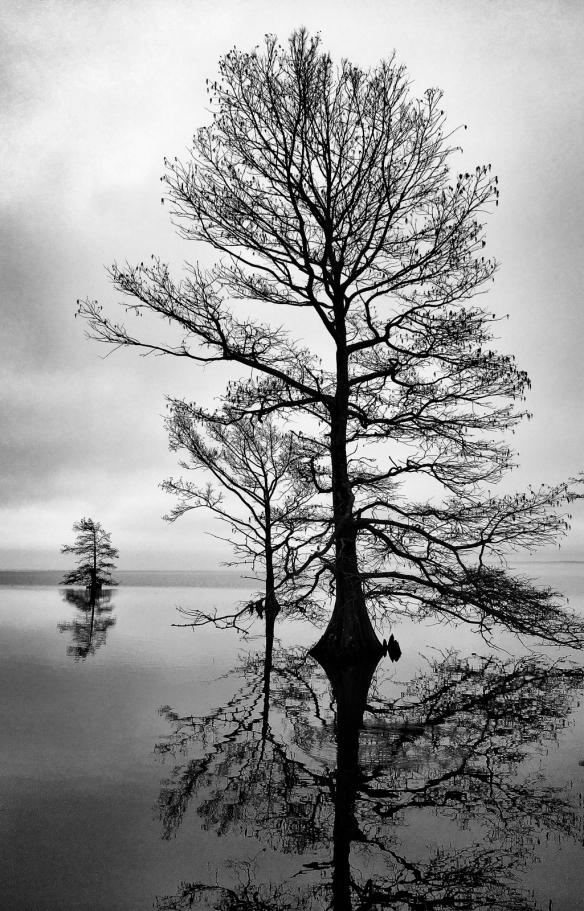 tree silhouette north shore mattamuskeet