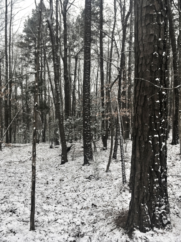 forest after a brief snow