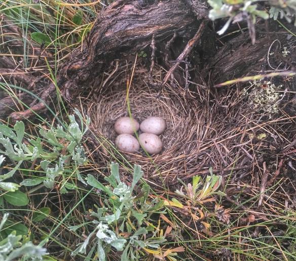 sparrow nest 1