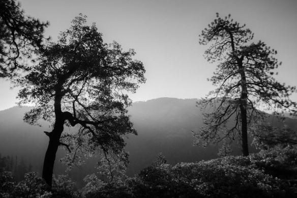 View from campsite B&W