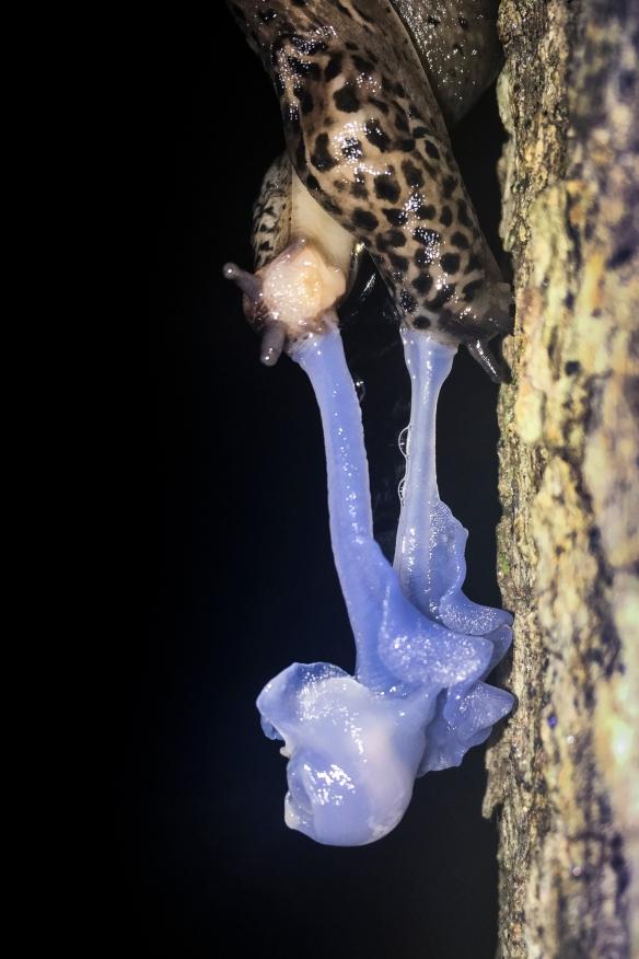 Slug sex 3