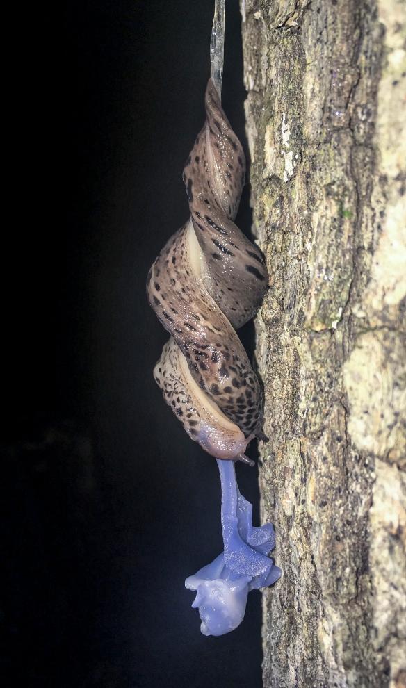 Slug sex 4