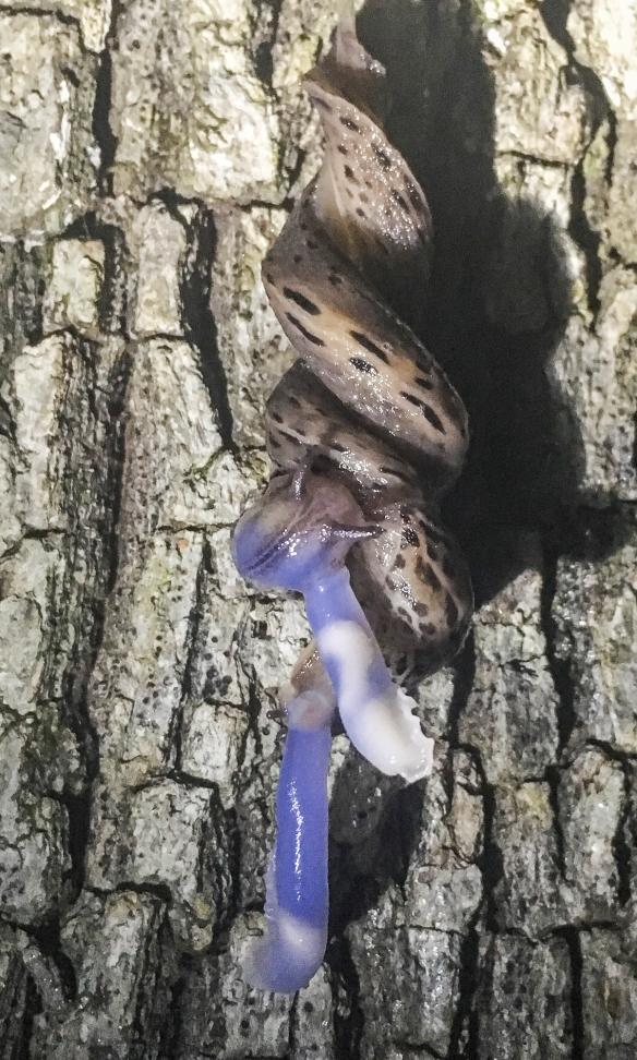 Slug sex