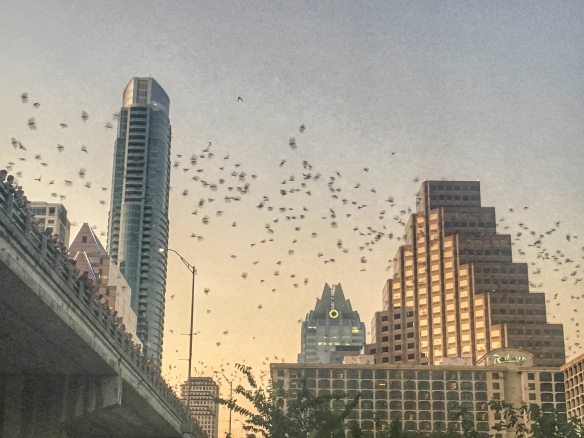 Bats at bridge in Austin