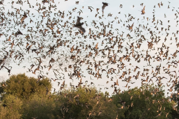 Bats in late sunlight