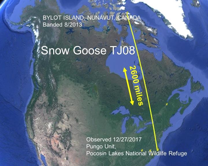 Snow goos TJ08 migration map 1