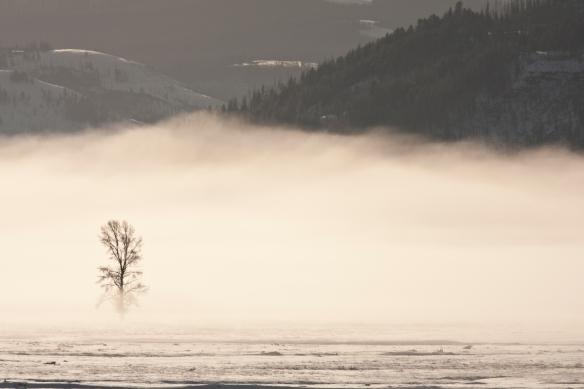 Magic mist YNP