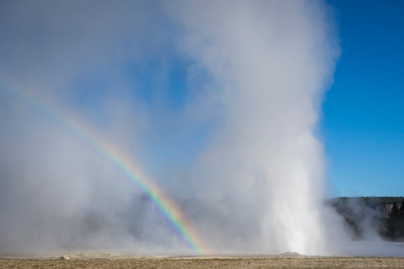 Daisy geyser and rainbow