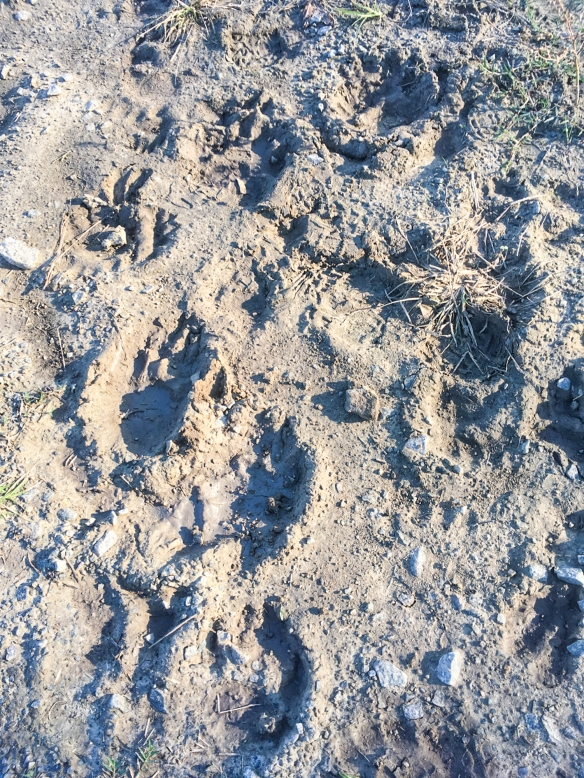Bear Rd tracks