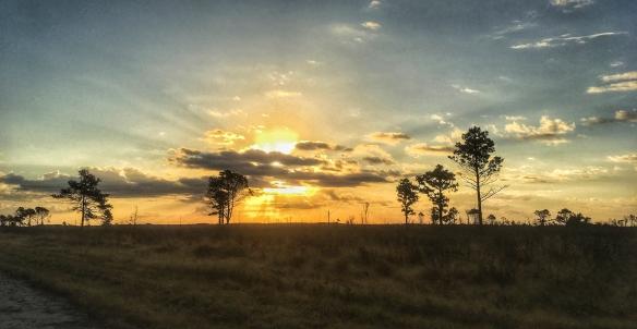 sunrise Pungo