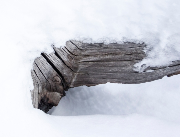 weathered log in snow