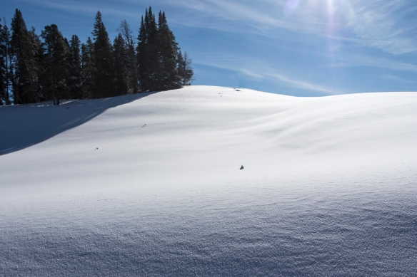 Rolling hillside of untouched snow